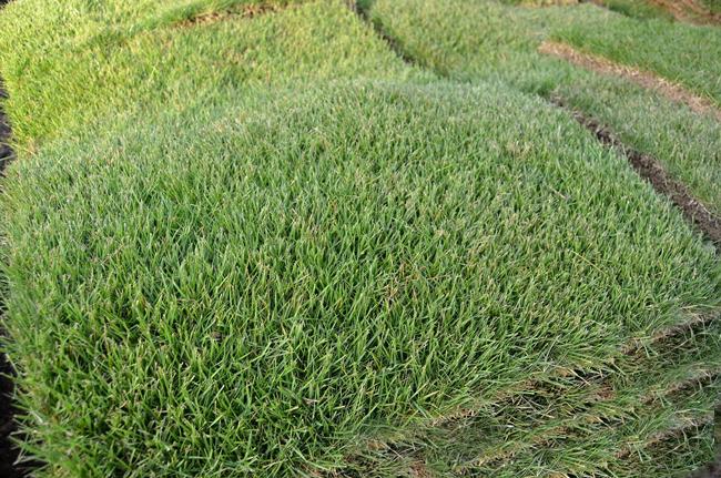 Landscaping Dunwoody Pinestraw Llc
